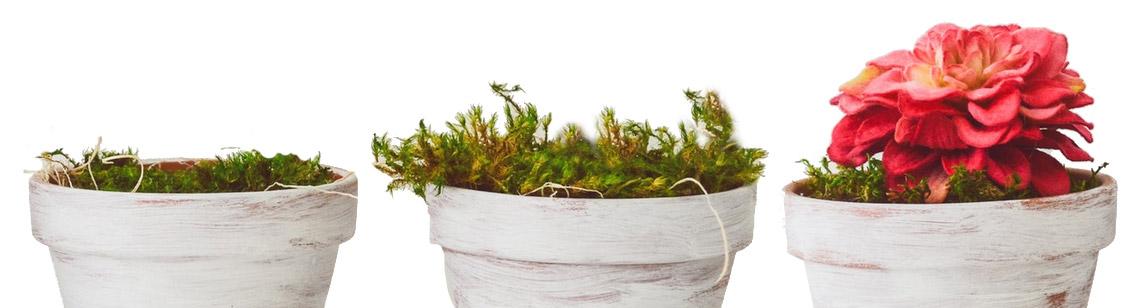 Photos of flower pots growing.